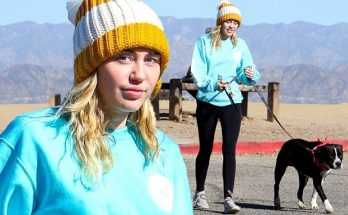 Miley Cyrus Steps Out for a Walk With Pitbull MARY-JANE