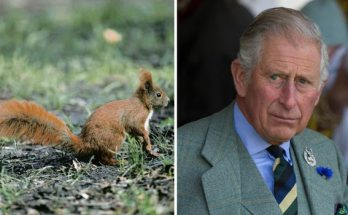 Prince Charles Talks to Squirrels and Gives Them NAMES!