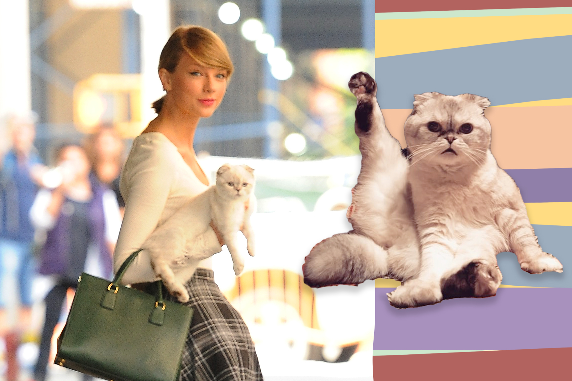 Taylor Swift TRADEMARKS All Her Cats' Names!